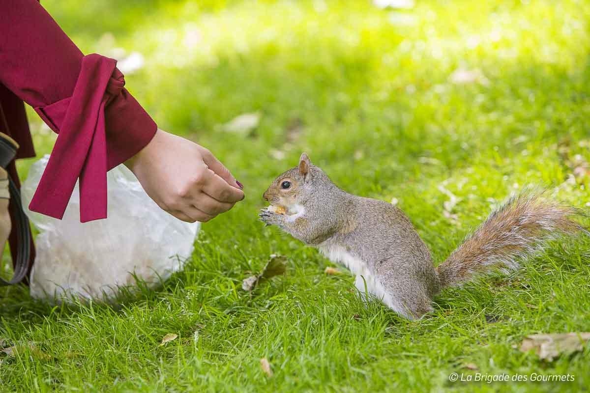 Les écureuils de Saint James