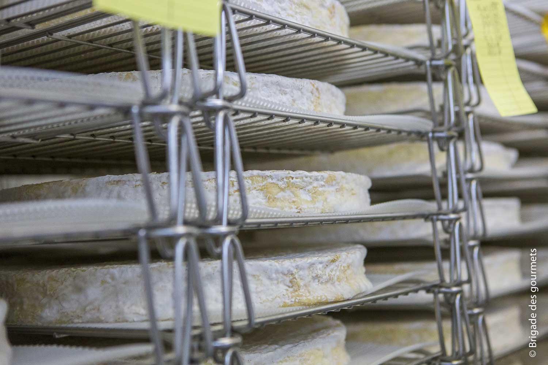 Brie de Meaux en cave